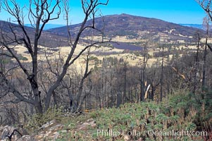 Fire damage on Stonewall Peak.  After the historic Cedar fire of 2003, much of the hills around Julian California were burnt.  One year later, new growth is seen amid the burnt oak trees and chaparral