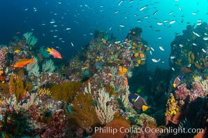 Fish schooling over reef at sunset, Sea of Cortez, Mikes Reef, Baja California, Mexico