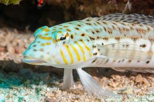 Fishiminatus unknownicus, Fiji, Namena Marine Reserve, Namena Island