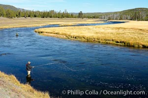 Fly fisherman wading in the Madison River, fall, autumn, Yellowstone National Park, Wyoming
