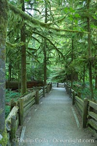 Footpath in Cathedral Grove.  Cathedral Grove is home to huge, ancient, old-growth Douglas fir trees.  About 300 years ago a fire killed most of the trees in this grove, but a small number of trees survived and were the originators of what is now Cathedral Grove.  Western redcedar trees grow in adundance in the understory below the taller Douglas fir trees, MacMillan Provincial Park, Vancouver Island, British Columbia, Canada