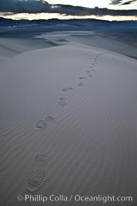 "Footprints in the sand, Eureka Dunes.  The Eureka Valley Sand Dunes are California's tallest sand dunes, and one of the tallest in the United States.  Rising 680' above the floor of the Eureka Valley, the Eureka sand dunes are home to several endangered species, as well as ""singing sand"" that makes strange sounds when it shifts.  Located in the remote northern portion of Death Valley National Park, the Eureka Dunes see very few visitors"
