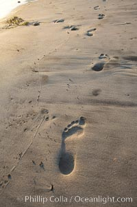 Footprints on a sandy beach, Ponto, Carlsbad, California