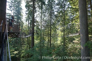 Suspension bridge in forest of Douglas fir and Western hemlock trees, Capilano Suspension Bridge, Vancouver, British Columbia, Canada