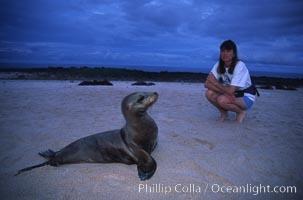 Admiring a young Galapagos sea lion, Mosquera island, Zalophus californianus wollebacki, Zalophus californianus wollebaeki, Mosquera Island