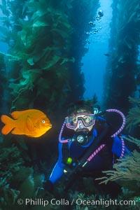 Diver and garibaldi, Hypsypops rubicundus, Catalina Island