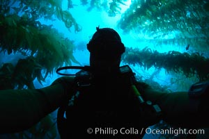Self portrait, underwater swimming through kelp forest, Macrocystis pyrifera, Catalina Island