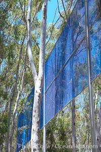 The Giraffe Traps, or what is officially known as Two Running Violet V Forms, was the second piece in the Stuart Collection at University of California San Diego (UCSD).  Commissioned in 1983 and produced by Robert Irwin, the odd fence resides in the eucalyptus grove between Mandeville Auditorium and Central Library. University of California, San Diego, La Jolla, California, USA, natural history stock photograph, photo id 12844