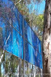 The Giraffe Traps, or what is officially known as Two Running Violet V Forms, was the second piece in the Stuart Collection at University of California San Diego (UCSD).  Commissioned in 1983 and produced by Robert Irwin, the odd fence resides in the eucalyptus grove between Mandeville Auditorium and Central Library, University of California, San Diego, La Jolla