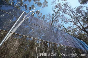The Giraffe Traps, or what is officially known as Two Running Violet V Forms, was the second piece in the Stuart Collection at University of California San Diego (UCSD).  Commissioned in 1983 and produced by Robert Irwin, the odd fence resides in the eucalyptus grove between Mandeville Auditorium and Central Library. University of California, San Diego, La Jolla, California, USA, natural history stock photograph, photo id 21238