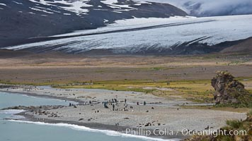 Glacier, beach, king penguins and antarctic fur seals, Fortuna Bay
