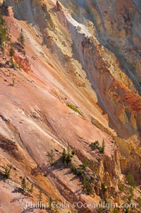 The sheer walls of the Grand Canyon of the Yellowstone take on a variety of yellow, red and orange hues due to iron oxidation in the soil and, to a lesser degree, sulfur content, Yellowstone National Park, Wyoming