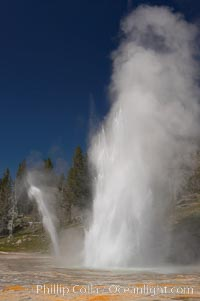 Grand Geyser erupts (right) with a simultaneous eruption from Vent Geyser (left).  Grand Geyser is a fountain-type geyser reaching 200 feet in height and lasting up to 12 minutes.  Grand Geyser is considered the tallest predictable geyser in the world, erupting about every 12 hours.  It is often accompanied by burst or eruptions from Vent Geyser and Turban Geyser just to its left.  Upper Geyser Basin.,  Copyright Phillip Colla, image #13445, all rights reserved worldwide.