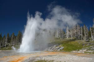 Grand Geyser erupts (right) with a simultaneous eruption from Vent Geyser (left).  Grand Geyser is a fountain-type geyser reaching 200 feet in height and lasting up to 12 minutes.  Grand Geyser is considered the tallest predictable geyser in the world, erupting about every 12 hours.  It is often accompanied by burst or eruptions from Vent Geyser and Turban Geyser just to its left.  Upper Geyser Basin, Yellowstone National Park, Wyoming