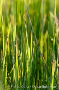 Grass backlit by the setting sun, Lake Clark National Park, Alaska