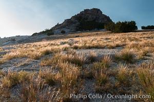 Grasses and false summit of Mount Hoffmann, Yosemite National Park, California