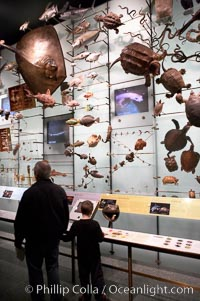 Visitors admire hundreds of species at the Hall of Biodiversity, American Museum of Natural History, New York City