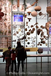 Visitors admire hundreds of species at the Hall of Biodiversity, American Museum of Natural History. American Museum of Natural History, New York City, New York, USA, natural history stock photograph, photo id 11222