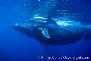 Humpback whale mother and calf, Megaptera novaeangliae, Maui