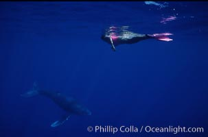 North Pacific humpback whale calf, Mikako Kotani, Megaptera novaeangliae, Maui