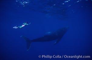 North Pacific humpback whale, Mikako Kotani, Megaptera novaeangliae, Maui