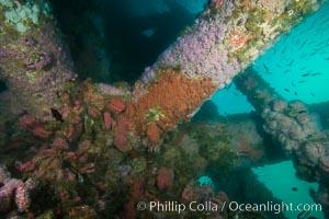 Oil Rig Ellen underwater structure covered in invertebrate life, Long Beach, California