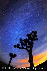 The Milky Way Galaxy shines in the night sky with a Joshua Tree silhouetted in the foreground.  The lights of Palm Springs glow on the horizon, Yucca brevifolia, Joshua Tree National Park, California