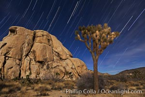 Joshua trees and star trails, moonlit night. The Joshua Tree is a species of yucca common in the lower Colorado desert and upper Mojave desert ecosystems, Yucca brevifolia, Joshua Tree National Park