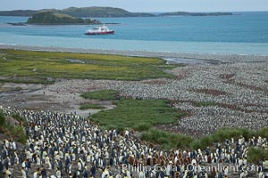 King penguin colony and the Bay of Isles on the northern coast of South Georgia Island.  Over 100,000 nesting pairs of king penguins reside here.  Dark patches in the colony are groups of juveniles with fluffy brown plumage.  The icebreaker M/V Polar Star lies at anchor, Aptenodytes patagonicus, Salisbury Plain
