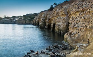 La Jolla Sea Caves, the famous La Jolla sea caves lie below tall cliffs at Goldfish Point. Sunrise