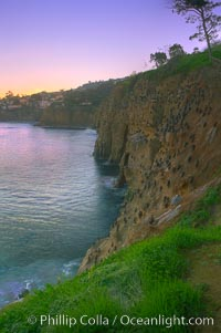 La Jolla Cliffs overlook the ocean with thousands of cormorants, pelicans and gulls resting and preening on the sandstone cliffs.  Sunrise with pink skies
