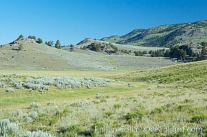 Lamar Valley, summer. The Lamar Valleys rolling hills are home to many large mammals and are often called Americas Serengeti, Yellowstone National Park, Wyoming