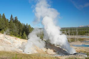 Ledge Geyser, vents releasing steam, in the Porcelain Basin area of Norris Geyser Basin, Yellowstone National Park, Wyoming