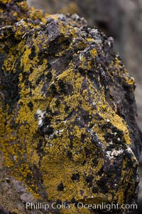Lichen covered rocks, Hannah Point, Livingston Island