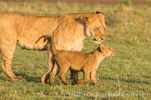 Lionness and cub, Maasai Mara National Reserve, Kenya, Panthera leo