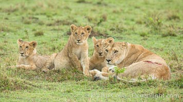 Lionness and cubs, Maasai Mara National Reserve, Kenya, Panthera leo