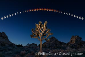 Lunar Eclipse and blood red moon sequence, stars, astronomical twilight, composite image, Joshua Tree National Park, April 14/15 2014