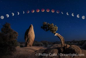 Lunar Eclipse and blood red moon sequence, over Juniper and Standing Rock, composite image, Joshua Tree National Park, April 14/15 2014