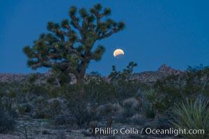 Lunar Eclipse Setting over Joshua Tree National Park, April 4 2015