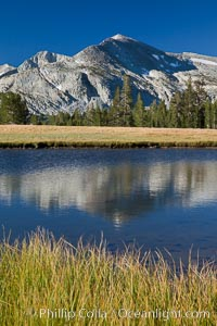 Mammoth Peak (12,117') reflected in small tarn pond at sunrise, viewed from meadows near Tioga Pass, Yosemite National Park, California