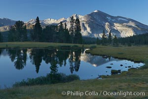 Mammoth Peak, reflected in a small alpine tarn (pond) at Tioga Pass, with meadow grasses and trees, Yosemite National Park, California