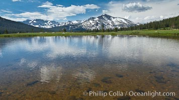 Mammoth Peak in the Yosemite High Country, reflected in small tarn pond, viewed from meadows near Tioga Pass. Yosemite National Park, California, USA, natural history stock photograph, photo id 26982