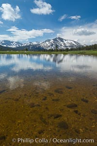 Mammoth Peak in the Yosemite High Country, reflected in small tarn pond, viewed from meadows near Tioga Pass, Yosemite National Park, California