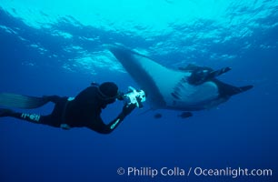 Manta ray and freediving videographer. San Benedicto Island (Islas Revillagigedos), Baja California, Mexico, Manta birostris, natural history stock photograph, photo id 02473