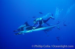 Manta ray and diver, Isla San Benedicto, Manta birostris, San Benedicto Island