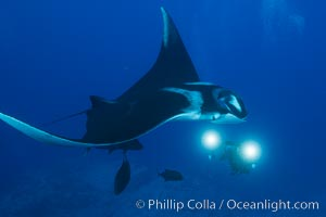 Giant Manta Ray at Socorro Island, Revillagigedos, Mexico. Socorro Island (Islas Revillagigedos), Baja California, Mexico, Manta birostris, natural history stock photograph, photo id 33286