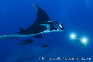 Giant Manta Ray at Socorro Island, Revillagigedos, Mexico. Socorro Island (Islas Revillagigedos), Baja California, Mexico, Manta birostris, natural history stock photograph, photo id 33293