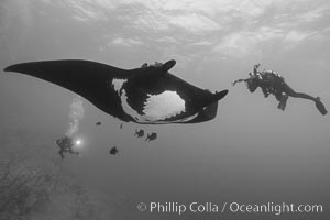 Giant Manta Ray at Socorro Island, Revillagigedos, Mexico. Socorro Island (Islas Revillagigedos), Baja California, Mexico, Manta birostris, natural history stock photograph, photo id 33294