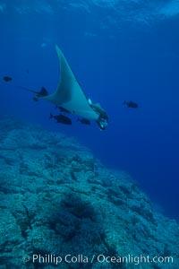 Giant Manta Ray at Socorro Island, Revillagigedos, Mexico, Manta birostris, Socorro Island (Islas Revillagigedos)