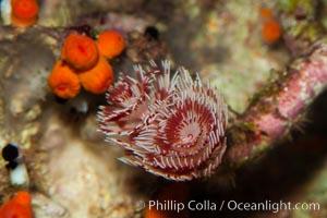 Unidentified marine worm